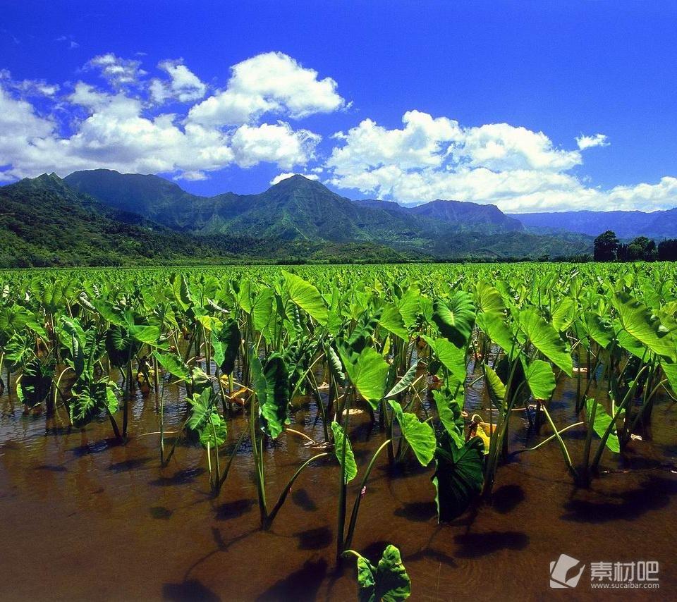美丽大自然山清水秀的景色手机壁纸,美丽的大自然