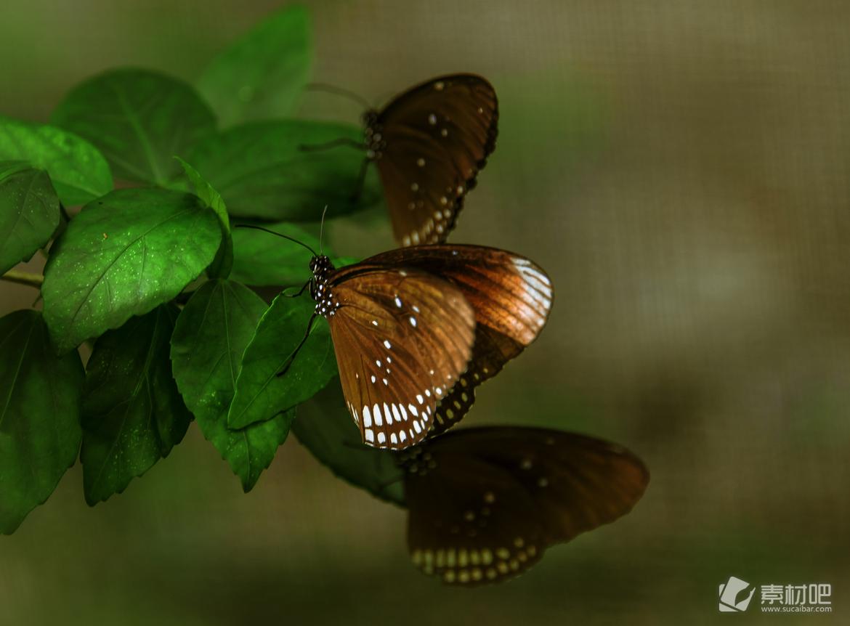 资源介绍:这款是昆虫蝴蝶写真桌面壁纸,大自然中