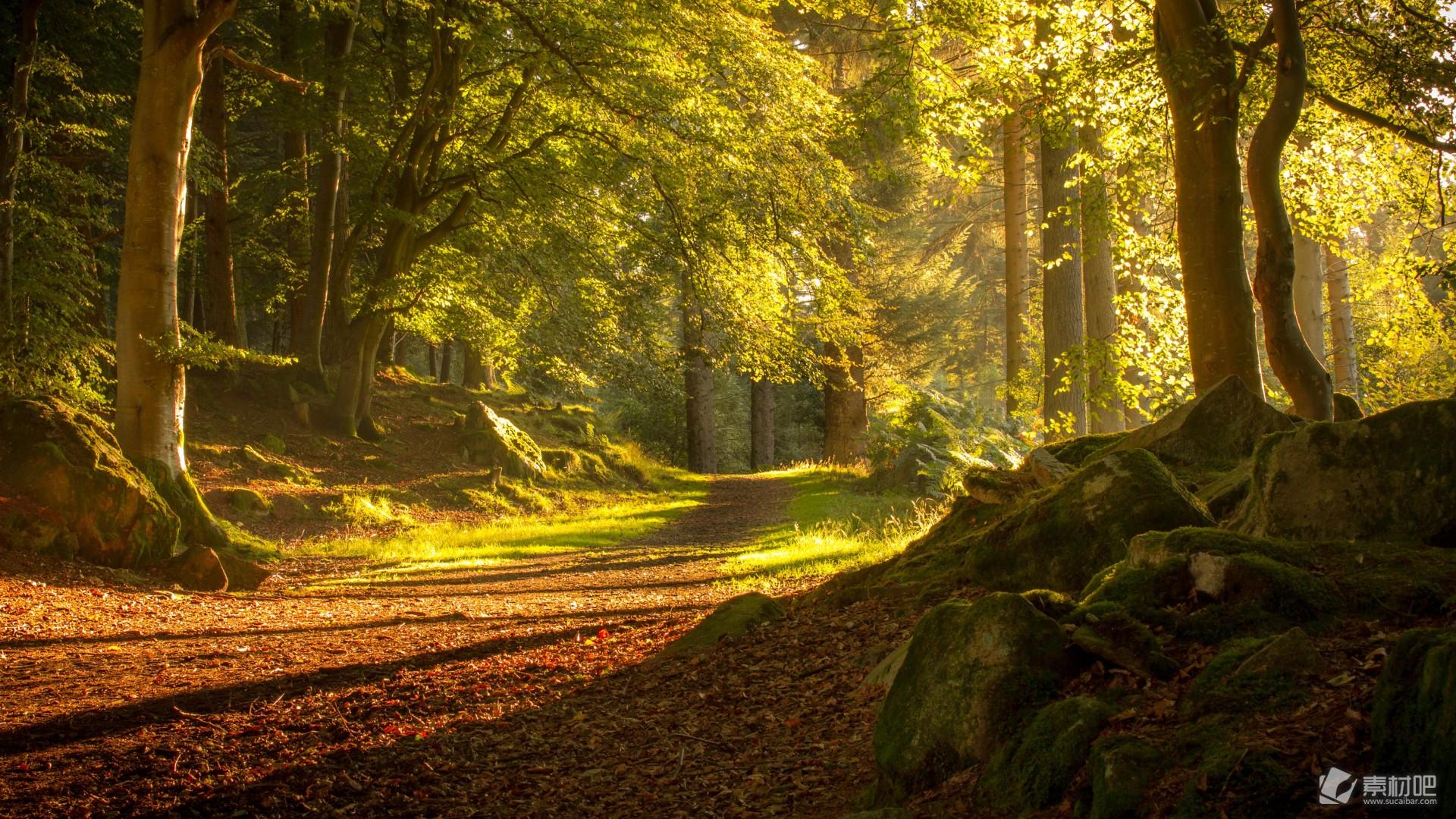 精选金黄色的秋天公园树木风景桌面壁纸