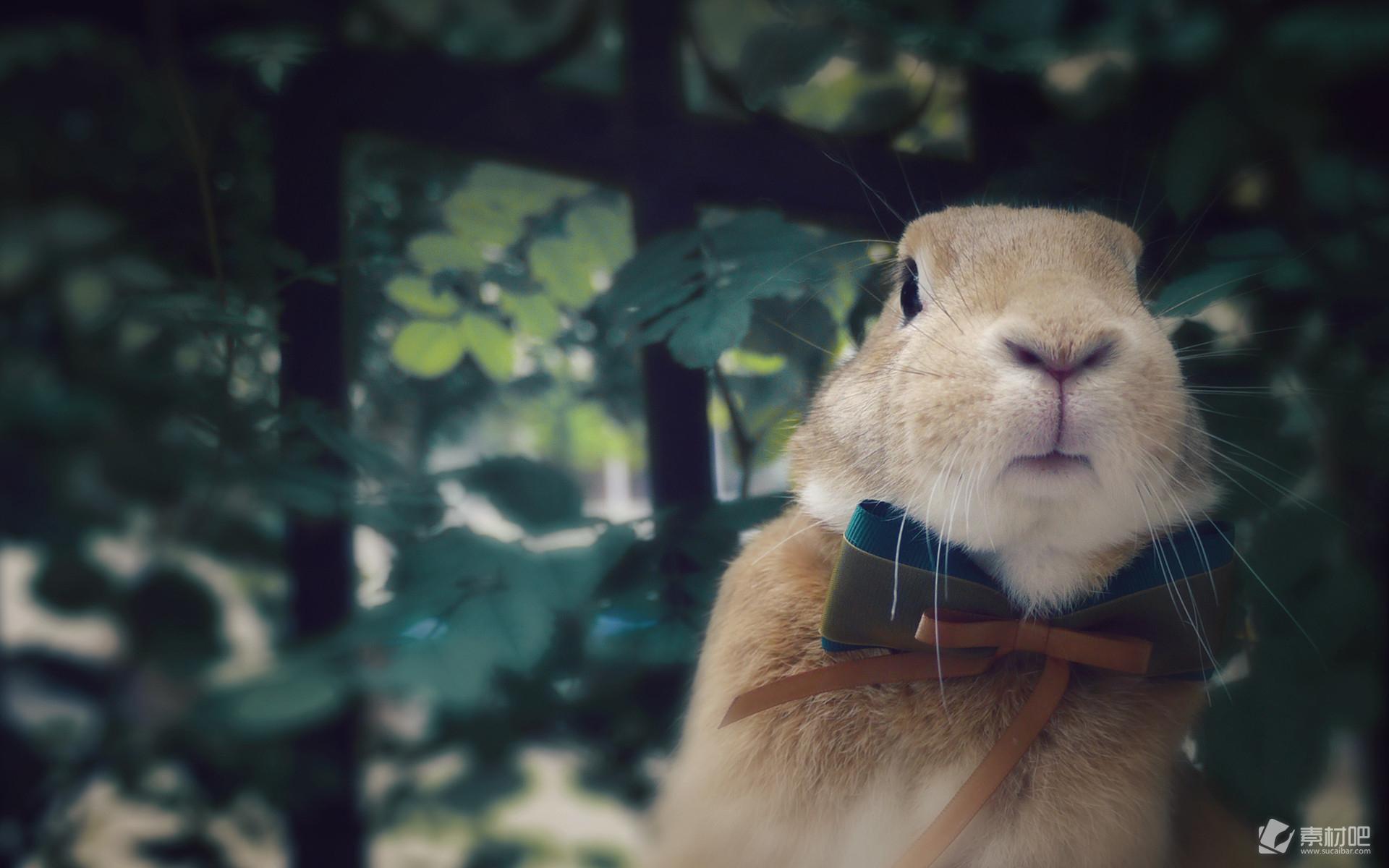 可爱动物小兔子呆萌高清电脑壁纸图片