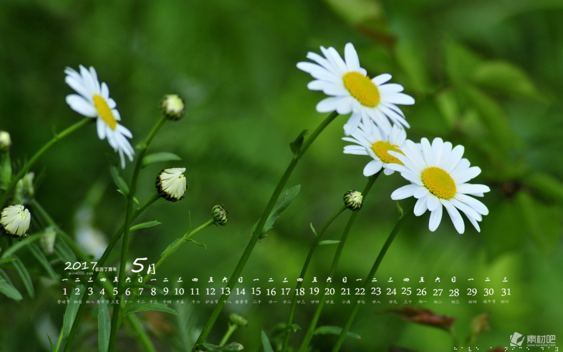 2017年5月绿色护眼植物桌面日历壁纸下载
