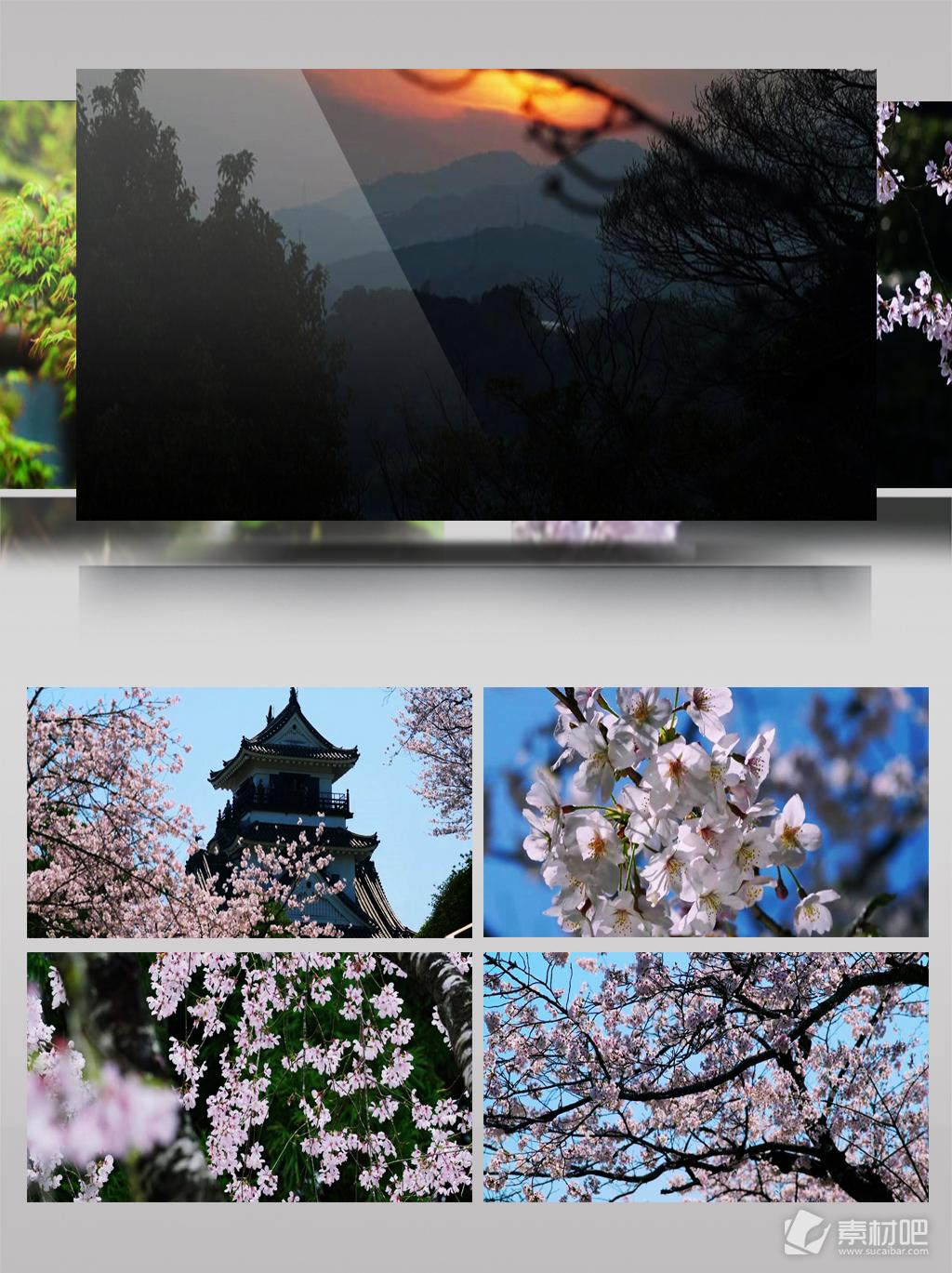 4k实拍日本唯美樱花自然风景超清bwin必赢亚洲