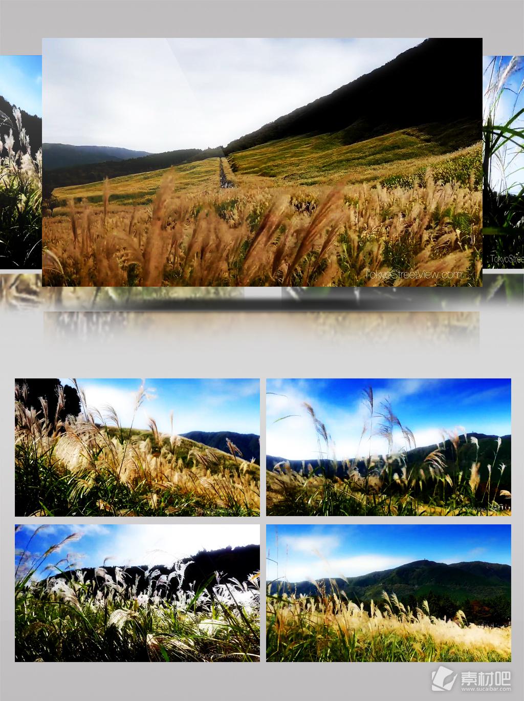 1080P超清白芒草草原风景